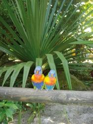 jardin couple oiseaux-photos preuves 446 ret.